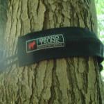 Tree slings